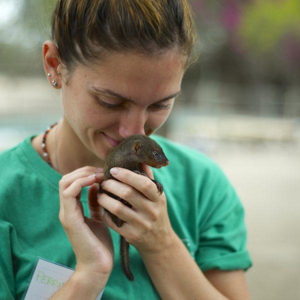 Volunteer cuddling a mongoose