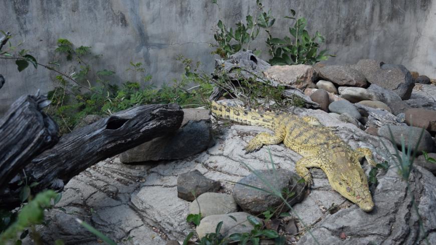 Kinyonga Reptile Park